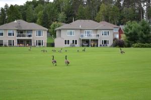 warrriors golf 2014 090