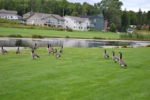 warrriors golf 2014 101
